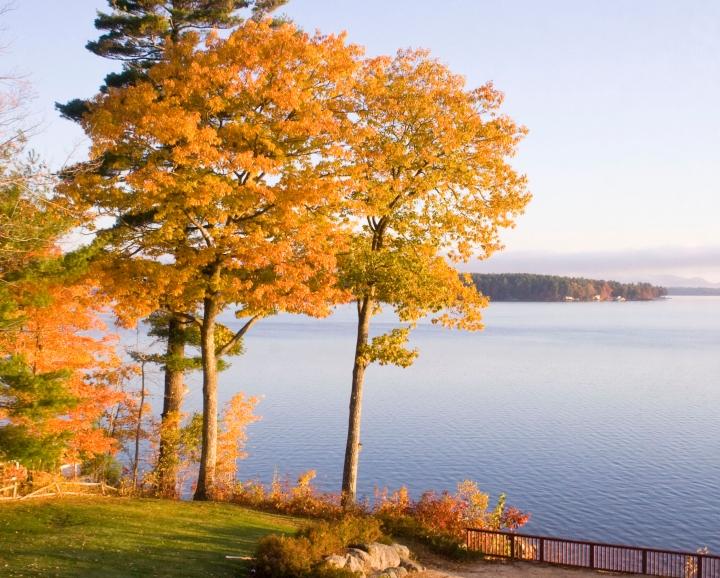Three trees, Lake Winnepesaukee, NH