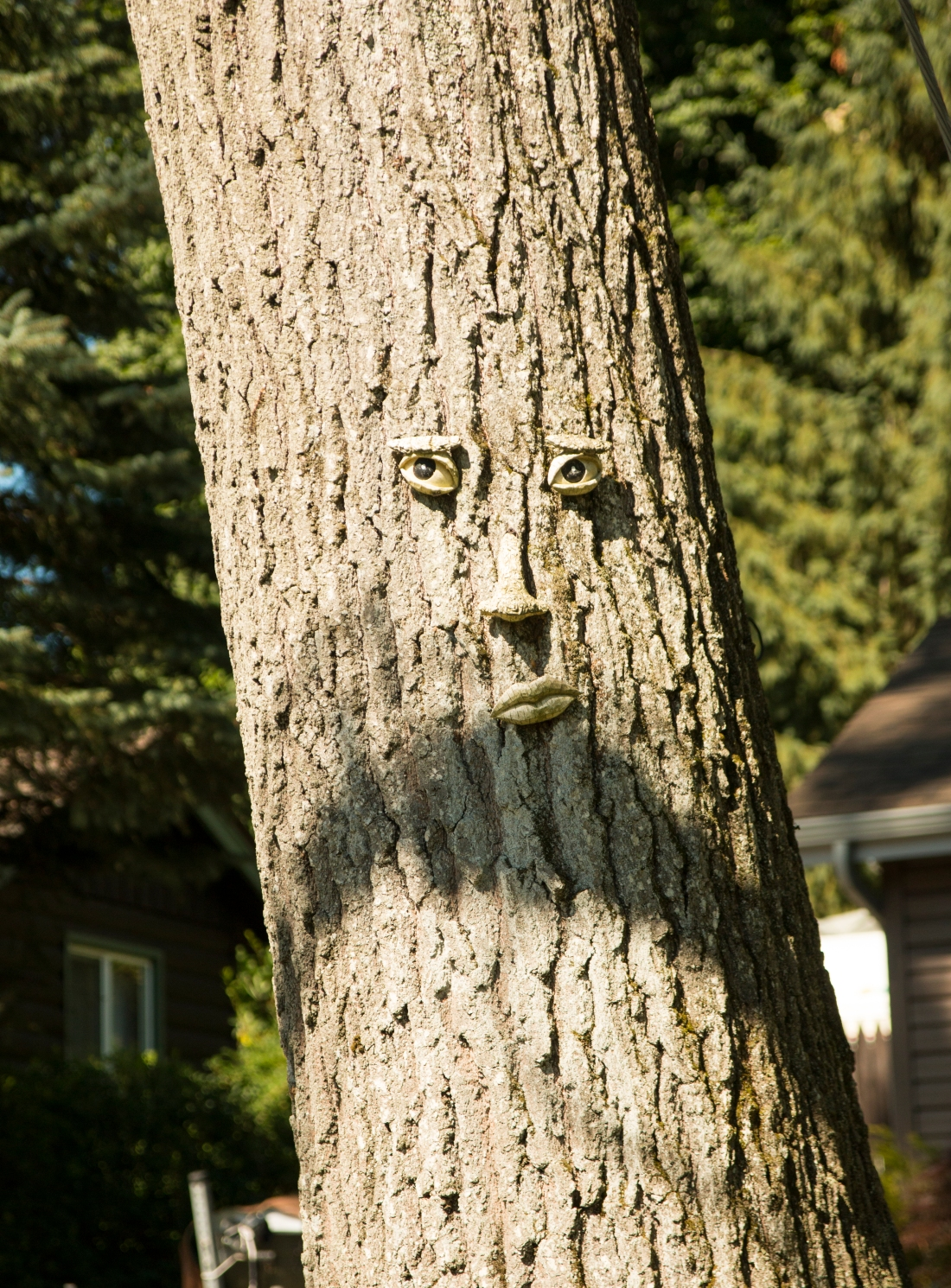 Mr. Tree.  Holland Michigan.  Shot with a Canon 70D.