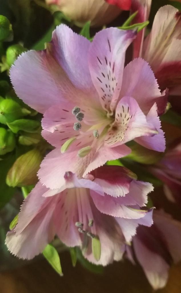 Flower Macro 2