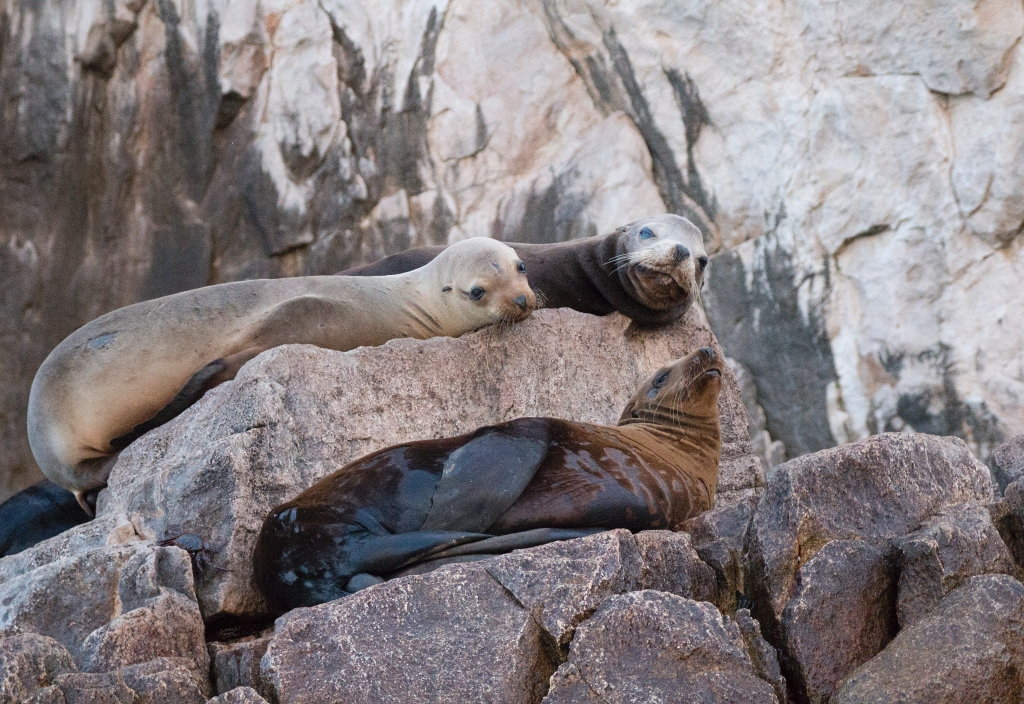 Sea Lions, Cabo San Lucas. Shot with a Canon 70D.