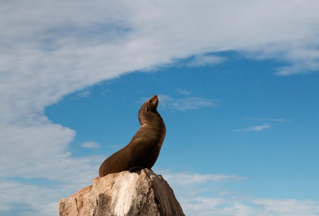 The Sea Lion Stretch. Cabo San Lucas, Mexico. Shot with a Canon 70D.