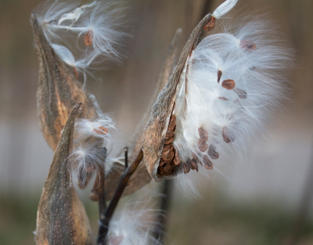 Seed Pods. Holland State Park. Shot with a Canon 70D