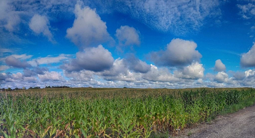 Michigan Cornfield Pano. Shot with a Samsung Galaxy S5.