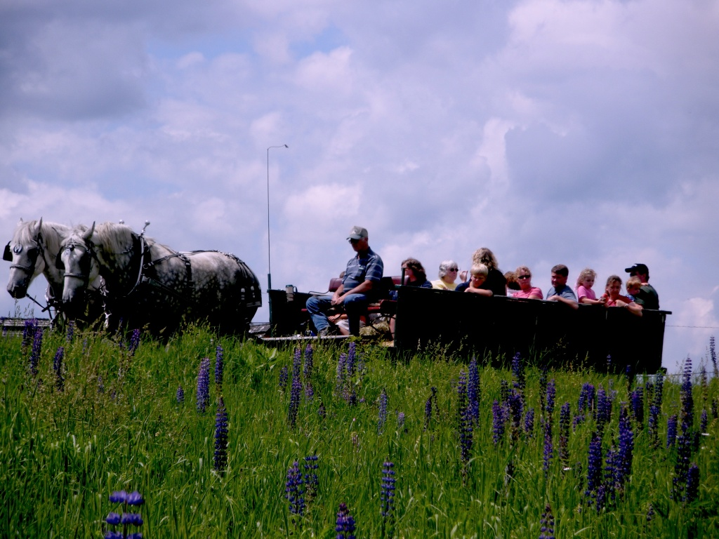 Wagon:Lupins