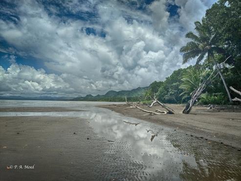 Shoreline, Savusavu, Fiji.